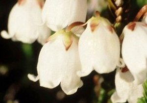 Flower symbolism mightylinksfo
